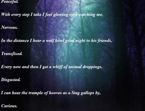 Year 4 Forest Poems